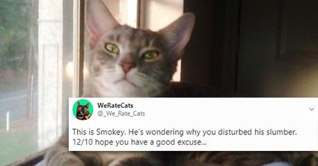 rating rate cats tweets twitter funny lol rates aww cute animals cat | WeRateCats @_We_Rate_Cats This is Smokey. He's wondering why disturbed his slumber. 12/10 hope have good excuse.