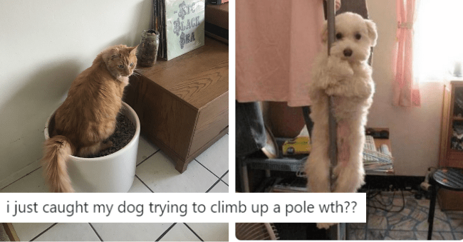 cats dogs caught doing funny tweets twitter cat dog pics in the act | Mark Burnett m8urnett caught my cat running out my office with my yubikey his mouth threat model hadn't considered.