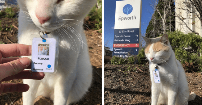 cats security guard hospital story cat cute wholesome adorable pictures aww | ELWOOD Security Richmond Epworth | Epworth 32 Erin Street Epworth Centre Bethesda Wing EMERGENCY Epworth Rehabilitation Consulting Suis ELWOOD