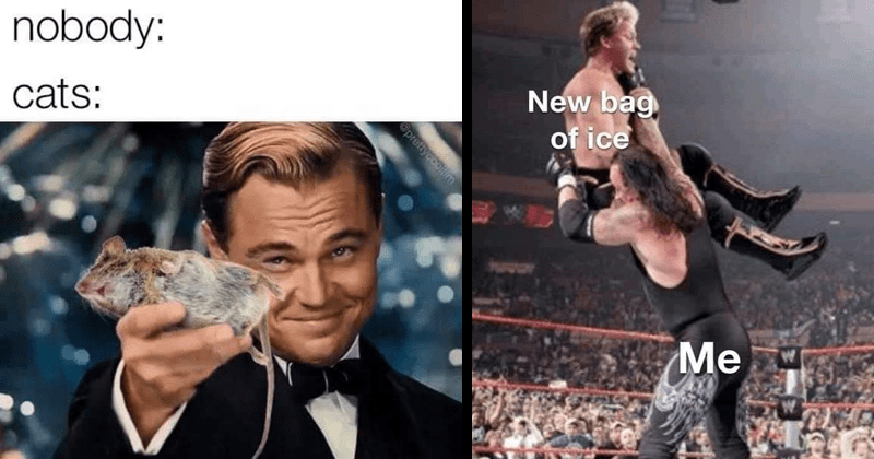 funny random memes and tweets | nobody: cats: Opreitycoolim Leonardo Dicaprio handing over a dead mouse | New bag ice 52 Undertaker pro wrestling