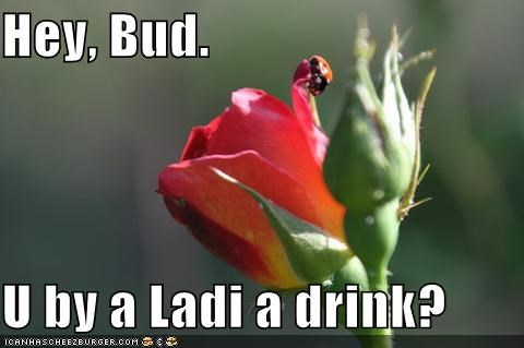 Hey, Bud.  U by a Ladi a drink?