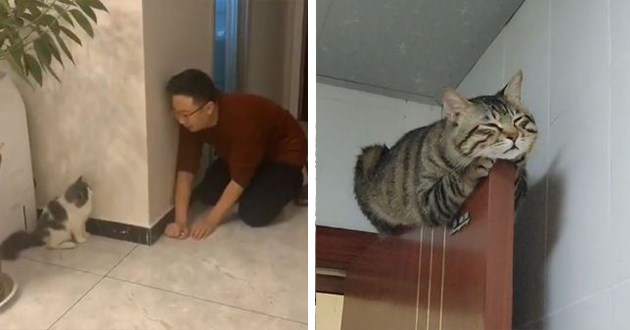 cute funny instagram videos of cats - thumbnail includes two images one of a man surprising a cat kitten and a cat chilling sleeping on top of a door