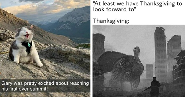 fresh funny animal memes - thumbnail includes two images one of gary the adventure cat reaching first summit and giant turkey apocalypse | Gary pretty excited about reaching his first ever summit! hiking mountain climbing cat | at least have Thanksgiving look forward Thanksgiving: