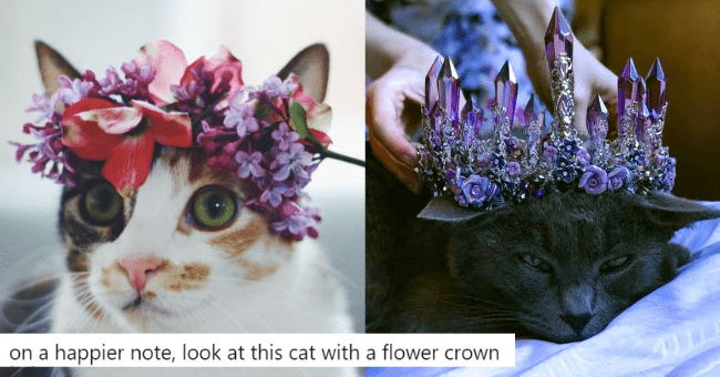 beautiful pictures of cats wearing flower crowns thumbnail picture includes two pictures including a black cat with a crystal flower crown and a white spotted cat wearing a flower crown 'Cat - Jan @jan_jan67 on a happier note, look at this cat with a flower crown'
