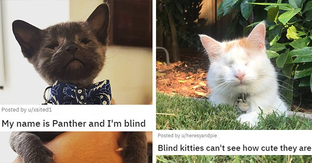 blind cats and blind pet appreciation - thumbnail includes two images one black blind kitten and one white and orange blind cat | My name Panther blind kitties can't see cute they are