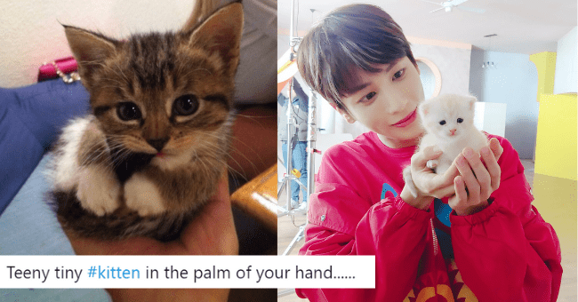 tiny kittens held in the palm of your hands thumbnail includes two pictures including a brown kitten held in someone's hand 'Cat - Cats and Kittens @catsnkittys Teeny tiny #kitten in the palm of your hand..' and a white kitten held in the hands of kpop band member txt Taehyun