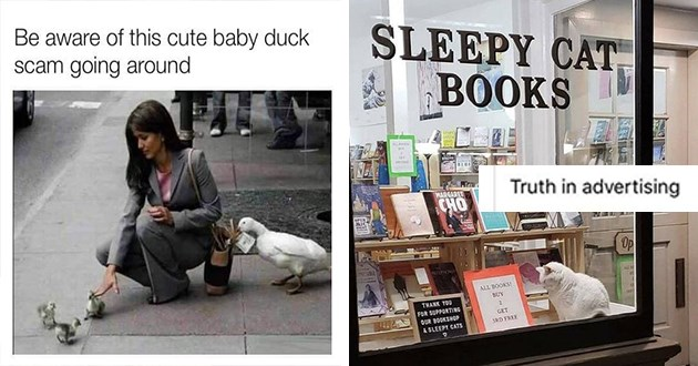 fresh list of animal memes and tweets - thumbnail includes two images | Be aware this cute baby duck scam going around duck grabbing money out of a woman's bag while she's crouching down to pet ducklings | Truth advertising SLEEPY CAT BOOKS MARGARET CHO OPEN MIC Op ALL BOOKS! BUY THANK SUPPORTING GET OUR BOOKSHOP 3RD FREE SLEEPY CATS cat sleeping in a book store window