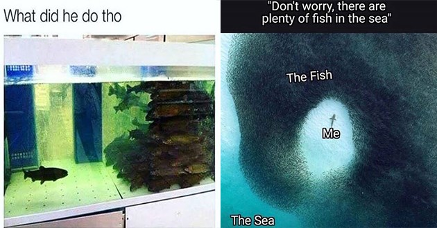 "variety of fish and crustacean memes - thumbnail includes two images one of a fish separated from group of fish ""what did he do"" and there are plenty of fish in the sea meme 