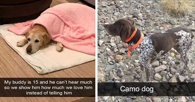 wholesome cute and funny dog snapchats - thumbnail includes two images one of senior pup being shown love instead of just being told and a camo dog camouflaging with backdrop | My buddy is 15 and he can't hear much so show him much love him instead telling him