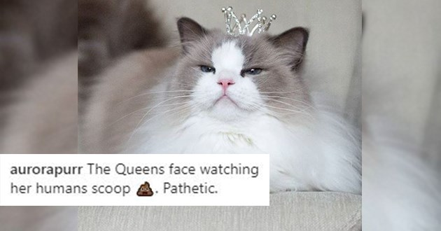"instagram spotlight on the cat princess aurora - thumbnail of princess cat aurora judging ""the queens face watching her humans scoop poop. pathetic."""