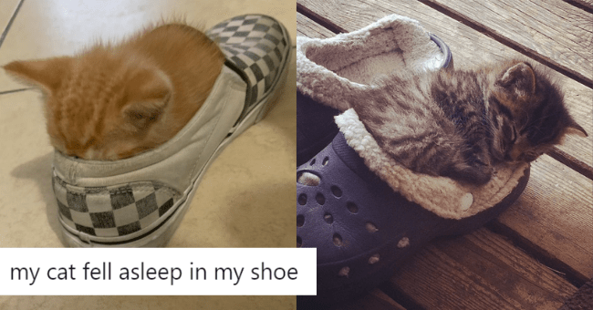 pictures of cute kittens sleeping in shoes thumbnail includes two pictures including a grey cat sleeping inside of crocs and a ginger cat who fell asleep in a checkered slip on shoe 'my cat fell asleep in my shoe'