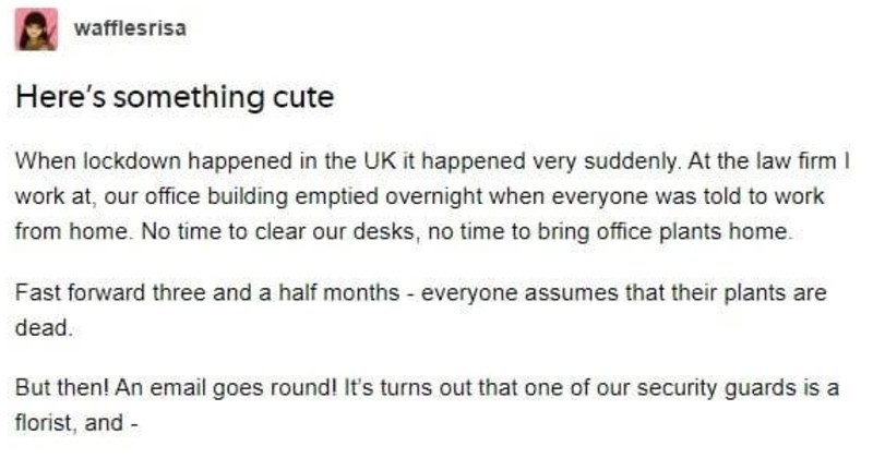 Tumblr thread on wholesome security team who saved office's plants | wafflesrisa Here's something cute lockdown happened UK happened very suddenly. At law firm work at, our office building emptied overnight everyone told work home. No time clear our desks, no time bring office plants home. Fast forward three and half months everyone assumes their plants are dead. But then! An email goes round s turns out one our security guards is florist, and