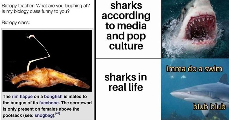 Funny memes about marine biology | Biology teacher are laughing at? Is my biology class funny Biology class rim flappe on bongfish is mated bungus its fuccbone scrotewad is only present on females above 69 | sharks according media and pop culture imma do swim sharks real life blub blub