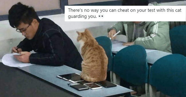 a collection of this week's best cat tweets thumbnail includes a picture of a classroom in which a cat is sitting on a collection of phones on the desk watching over a student taking an exam 'Job - 오늘은 영현이다C @todayitsyoungk There's no way you can cheat on your test with this cat guarding you. .. #FromFriendsJaeAndJed #HAPPY_JAE_DAY #제형이_생일축하함답 @Jae_Day6'