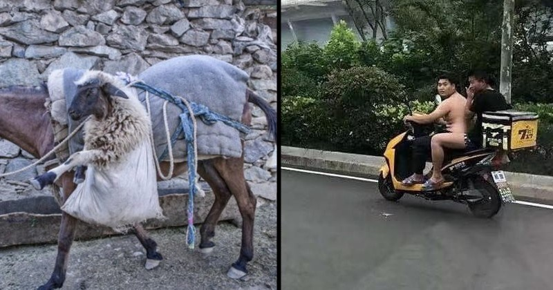 Double-take inducing optical illusions | goat sitting in a bag tied to a horse looking as if it's walking on its back legs like a human | shirtless man riding a bike with a man in shorts looking naked