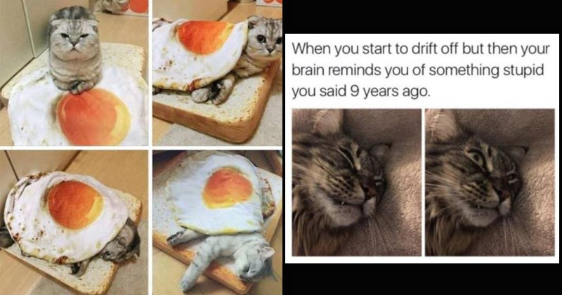 Funny memes about cats | start drift off but then brain reminds something stupid said 9 years ago. | cat sleeping under sunny side up fried egg blanket