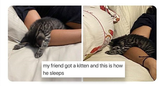 list of adorable and funny wholesome animals - thumbnail includes one tweet with two images of a kitten sleeping | my friend got kitten and this is he sleeps small cat funny weird sleeping position face down