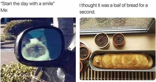 list of funny cat memes - thumbnail includes two cat memes | Start day with smile grumpy angry cat reflection car wing mirror | thought loaf bread second. orange cat sleeping in a pot