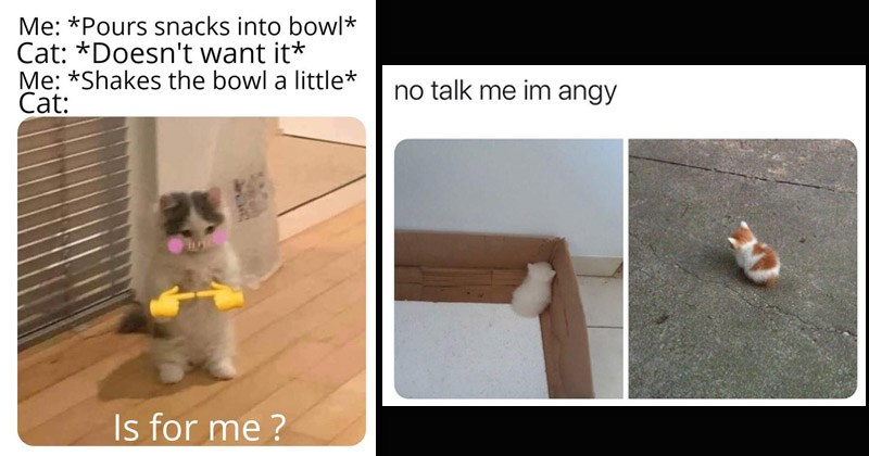 Funny dank memes about cats | Pours snacks into bowl Cat Doesn't want Shakes bowl little Cat: Is for me blushing cat pointing fingers | no talk im angy very small kittens facing away from the viewer