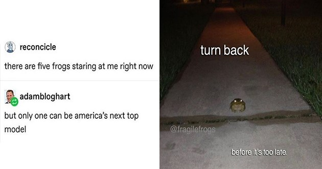 weird cute and funny frog memes | reconcicle there are five frogs staring at right now adambloghart but only one can be america's next top model | turn back @fragilefrogs before 's too late. ominous frog with glowing eyes