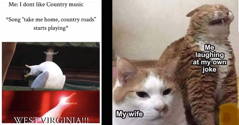 Funny random memes | dont like Country music Song take home, country roads starts playing Inhales WEST VIRGINIA screaming seagull | laughing at my own joke My wife two cats