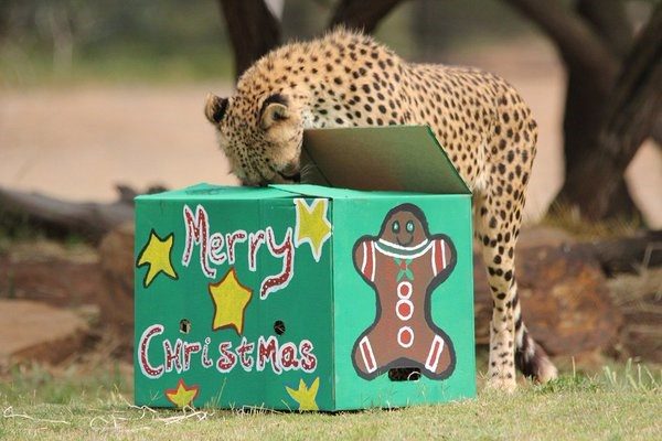 christmas festive zoo animals holidays - 1255941