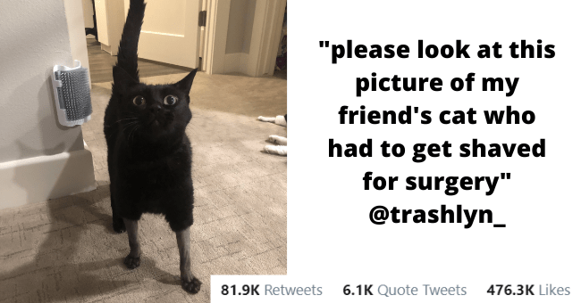 best animal tweets of the week thumbnail includes one picture of a black cat who has its legs shaved for a surgery staring at the camera looking surprised 'Black cat - Ash9 @trashlyn_ please look at this picture of my friend's cat who had to get shaved for surgery 6:18 AM - Sep 15, 2020 · Twitter for iPhone 81.9K Retweets 6.1K Quote Tweets 476.3K Likes'