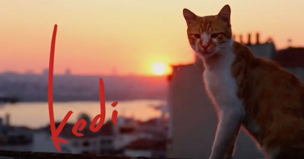trailers,istanbul,kedi,movies,Cats,Video