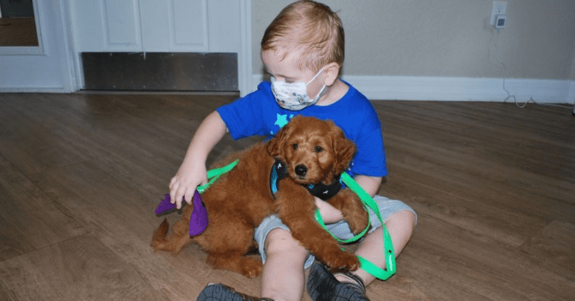 story of a cancer survivor giving a puppy to a cancer patient thumbnail includes one picture of a boy sitting on the floor with a goldendoodle puppy in his lap