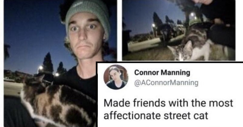 twitter thread about adopting a stray cat | Connor Manning @AConnorManning Made friends with most affectionate street cat
