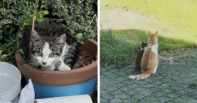 story of a cat who took in a stray kitten under his wing, into his home and heart - thumbnail of cat and the stray kitten he befriended | cat peeking out from a flower pot and two cats sitting side by side