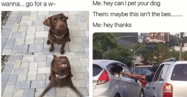 collection of dog memes thumbnail includes two pictures including a meme of a dog being excited over going on a walk 'Dog - wanna... go for a w-' and a picture of two cars on the road and a person from one car reaching out of it to pt a dog in the other car 'Motor vehicle - Me: hey can I pet your dog Them: maybe this isn't the bes.. Me: hey thanks'