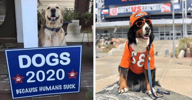 list of all the current and previous dog mayors of the united states thumbnail includes two pictures including a dog in an orange jersey hat and sunglasses standing in front of a sign and another of a smiling dog behind a campaign sign that says 'Dog - Dog - DOGS 2020 BECAUSE HUMANS SUCK'