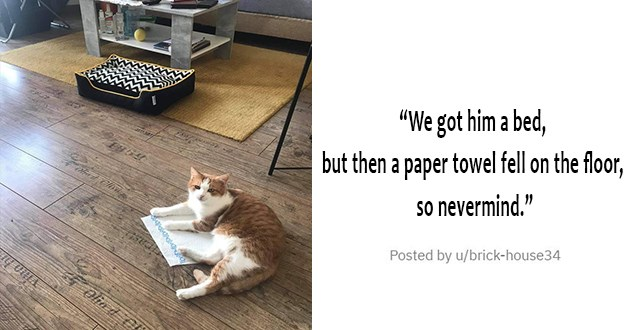 medley of cute, funny cats and tribute to cats who have recently passed the rainbow bridge - thumbnail of cat laying on paper towel when his bed is right beside him untouched | We got him a bed, but then a paper towel fell on the floor, so nevermind