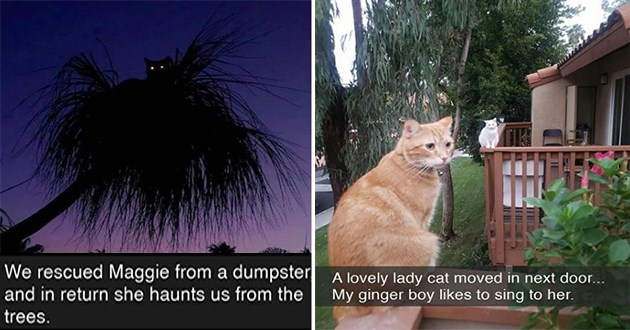 cats snaps cat snapchat, funny, lol, aww, cute, adorable, humor, silly, animals, wholesome | rescued Maggie dumpster and return she haunts us trees. silhouette of a cat with glowing eyes on top of a tree | lovely lady cat moved next door My ginger boy likes sing her. two cats on neighbors porches
