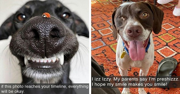 adorable and silly dog snapchats - thumbnail includes two images one of a dog with a ladybug on its snoot and another of an one-eyed beautiful dog here to provide smiles | if this photo reaches timeline, everything will be okay | izz Izzy. My parents say preshizzz hope my smile makes smile!