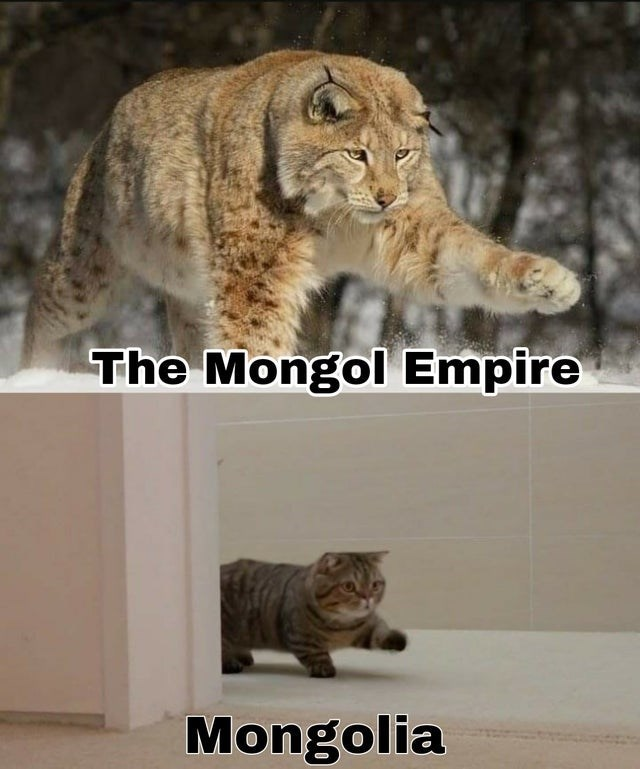 top weekly funny history memes | Cat - Mongol Empire Mongolia