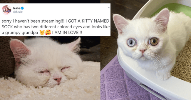 best cat tweets of the week thumbnail includes two pictures of the same white cat one with its eyes open one eye green and the other blue and another of the cat lying on a white carpet with its eyes closed 'Cat - leslie @fuslie sorry I haven't been streaming!!! I GOT A KITTY NAMED SOCK who has two different colored eyes and looks like a grumpy grandpa I AM IN LOVE!!! 7:30 AM Sep 20, 2020 · Twitter for iPhone 456 Retweets 41 Quote Tweets 12.7K Likes'