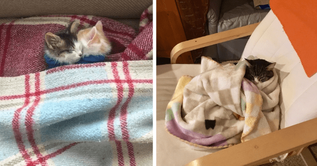 pictures and tweets of cats and kittens snuggling under blankets thumbnail includes two pictures including a cat wrapped up in a blanket on an armchair and another of two kittens hugging each other under a blanket