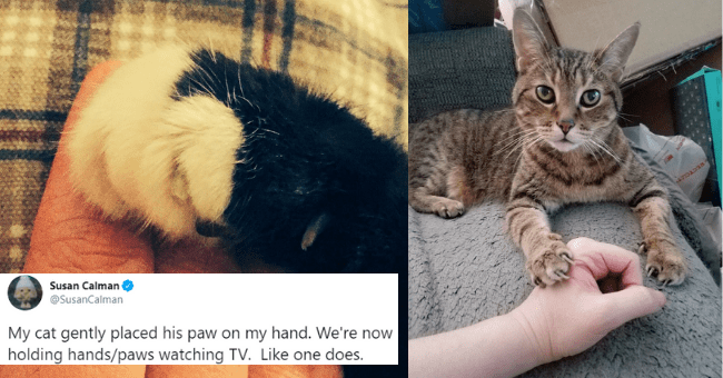 tweets and tumblr posts pictures of cats holding hands with humans thumbnail includes two pictures including a cat looking into the camera with its palm placed on a person's hand and another of a cats black and white paw lying on a human's fingers 'Puppy - Susan Calman @SusanCalman My cat gently placed his paw on my hand. We're now holding hands/paws watching TV. Like one does.'