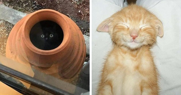 series of cat images - thumbnail includes two cat pictures one of a black cat in a pot and one of an orange kitten sleeping and smiling