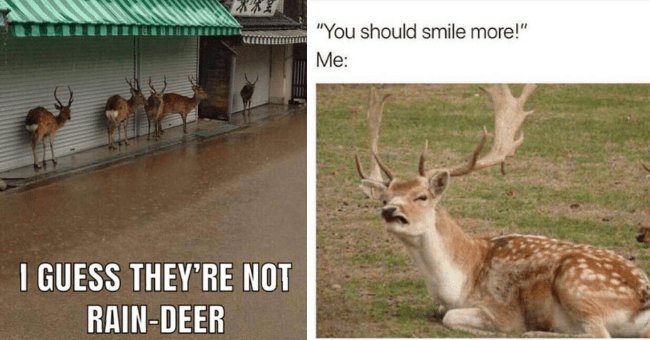 "collection of deer memes thumbnail includes two pictures one of a group of deer hiding from the rain 'Wildlife - I GUESS THEY'RE NOT RAIN-DEER TAW' and another of a deer making a face at the camera 'Wildlife - ""You should smile more!"" Me:'"