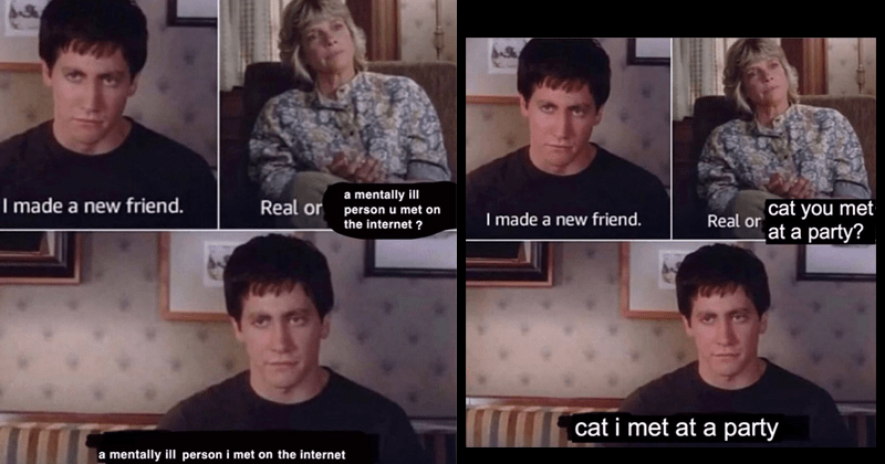 Funny memes from Donnie Darko starring Jake Gyllenhaal, Real friend, depressing memes, relatable memes, plant memes, cat memes | made new friend mentally ill Real or person u met on internet mentally ill person met on internet | made new friend. Real or cat met at party cat met at party
