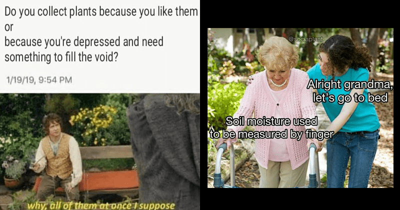 funny random memes, dank memes, plant memes, memes about houseplants, gardening memes | Lord of the Rings LotR Bilbo talking to Gandalf Do collect plants because like them or because depressed and need something fill void? 1/19/19, 9:54 PM why, all them at once suppose | Soil moisture used be measured by finger @sociaplant Alright grandma, let's go bed