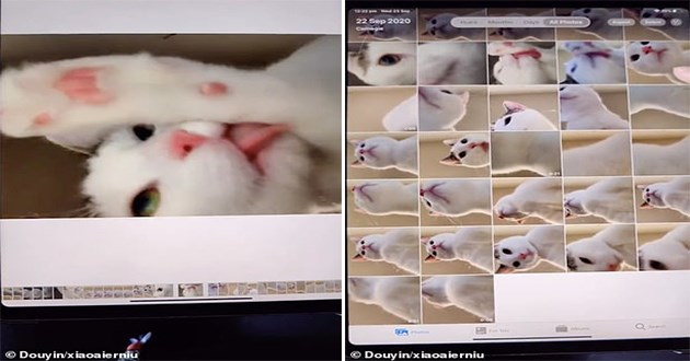 story of a cat who opened an ipad and took dozens of selfies of itself - thumbnail of cat who took selfies of itself