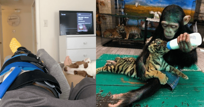 collection of pictures with stories in them that are worth more than 1000 words thumbnail includes two pictures including one of a chimpanzee bottle-feeding a tiger and another of someone with a broken leg and a dog laying its head on the leg that is not broken looking up with puppy eyes at the person with the camera