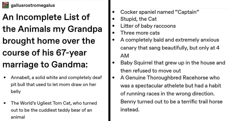 "Wholesome list of animals someones grandparents brought home over the course of their long marriage, cute animals, cats, squirrels, dogs | gallusrostromegalus An Incomplete List Animals my Grandpa brought home over course his 67-year marriage Gandma Annabell solid white and completely deaf pit bull used let mom draw on her belly World's Ugliest Tom Cat, who turned out be cuddiest teddy bear an animal Cocker spaniel named ""Captain"" Stupid Cat Litter baby raccoons Three more cats completely bald"