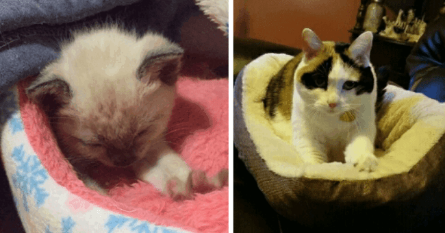 gifs of cats kneading blankets humans and other cats thumbnail includes two pictures including a cat kneading a cat bed and a kitten kneading a pink blanket