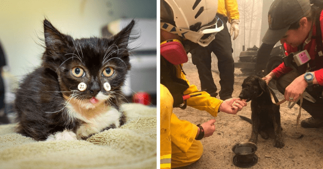 collection of stories of rescued animals and their rescuers from the past month thumbnail includes two pictures one of a black kitten with two buttons next to its nose and another of a black puppy surrounded by rescuers
