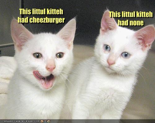 Cheezburger Image 1262315776